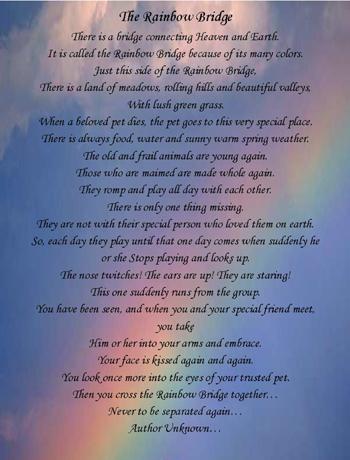 Rainbow Bridge Poem: Author Unknown